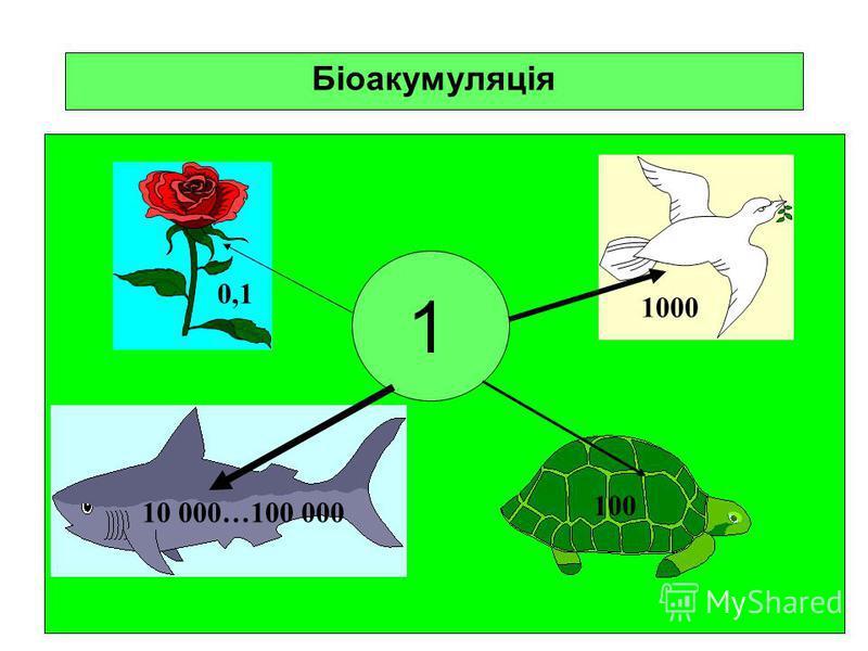 Біоакумуляція 0,1 1000 10 000…100 000 100 1