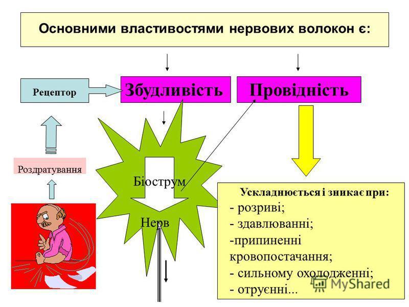 Основними властивостями нервових волокон є: ЗбудливістьПровідність Рецептор Роздратування Нерв Ускладнюється і зникає при: - розриві; - здавлюванні; -припиненні кровопостачання; - сильному охолодженні; - отруєнні... Біострум