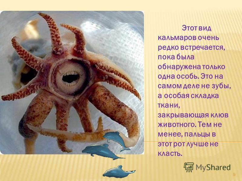 Этот вид кальмаров очень редко встречается, пока была обнаружена только одна особь. Это на самом деле не зубы, а особая складка ткани, закрывающая клюв животного. Тем не менее, пальцы в этот рот лучше не класть. 9