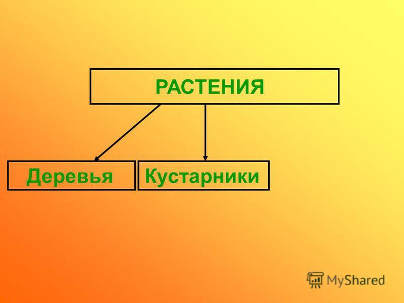 РАСТЕНИЯ Деревья Кустарники
