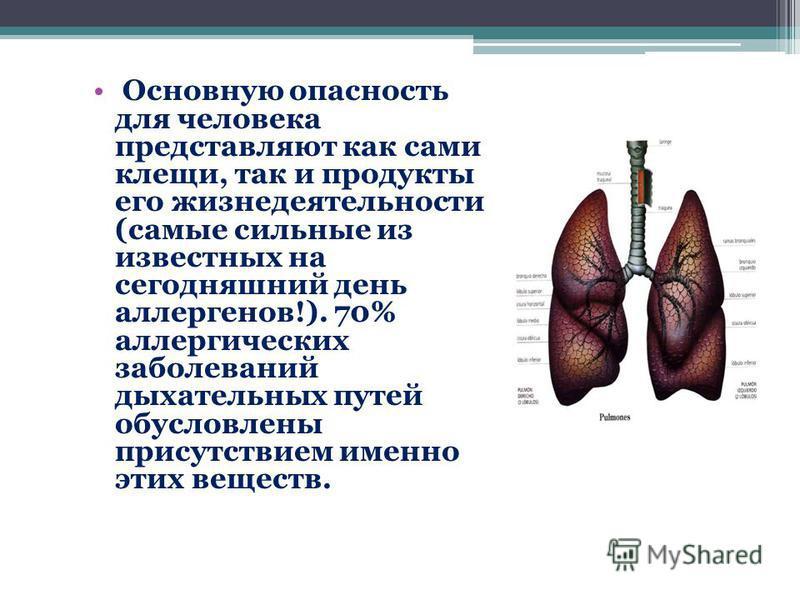 Основную опасность для человека представляют как сами клещи, так и продукты его жизнедеятельности (самые сильные из известных на сегодняшний день аллергенов!). 70% аллергических заболеваний дыхательных путей обусловлены присутствием именно этих вещес