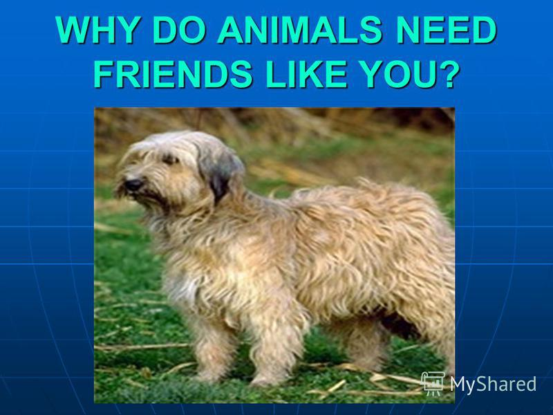 WHY DO ANIMALS NEED FRIENDS LIKE YOU?