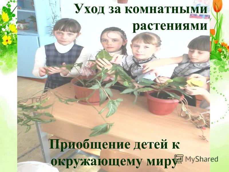 Уход за комнатными растениями Приобщение детей к окружающему миру