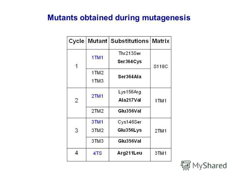 Mutants obtained during mutagenesis