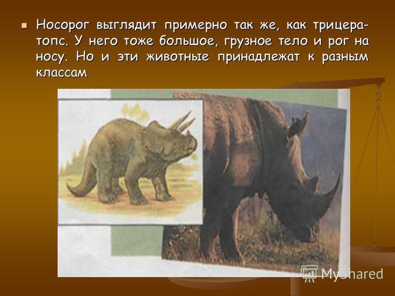 Броненосец защищён костяным панцирем, точь-в- точь как анкилозавр. Но и они не состоят в родстве. Броненосец защищён костяным панцирем, точь-в- точь как анкилозавр. Но и они не состоят в родстве.