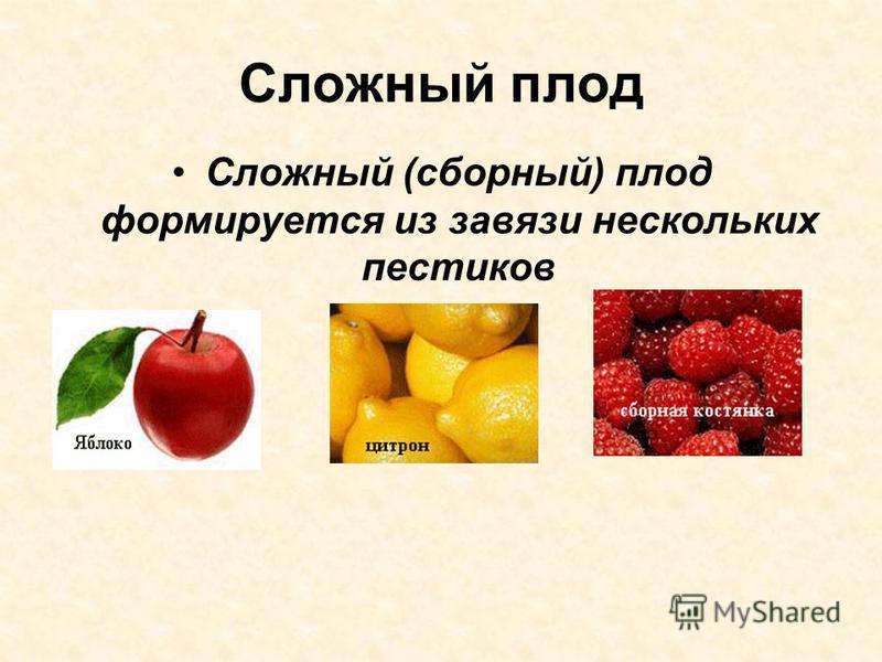 Сложный плод Сложный (сборный) плод формируется из завязи нескольких пестиков