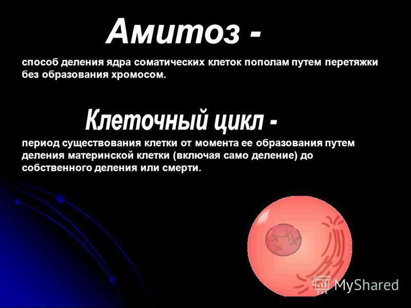 период существования клетки от момента ее образования путем деления материнской клетки (включая само деление) до собственного деления или смерти. способ деления ядра соматических клеток пополам путем перетяжки без образования хромосом.