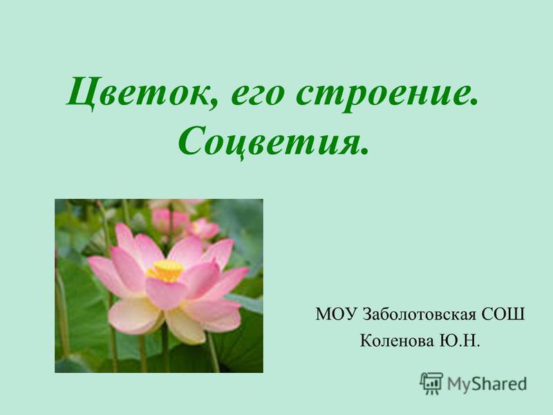 Цветок, его строение. Соцветия. МОУ Заболотовская СОШ Коленова Ю.Н.