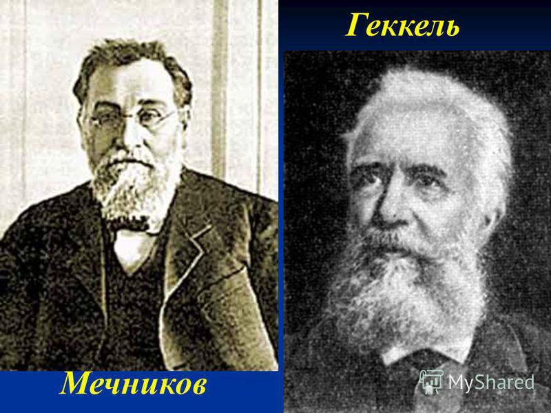 Мечников Геккель