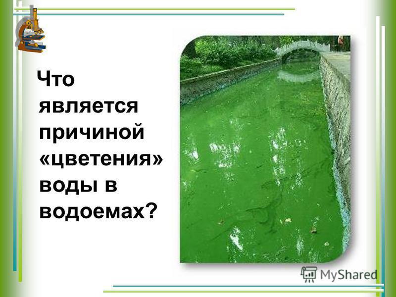 Что является причиной «цветения» воды в водоемах?