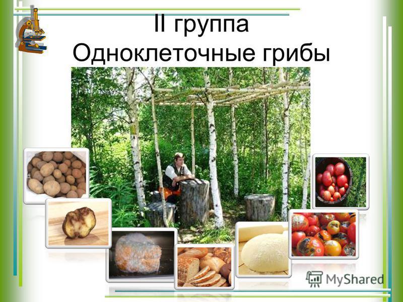 II группа Одноклеточные грибы