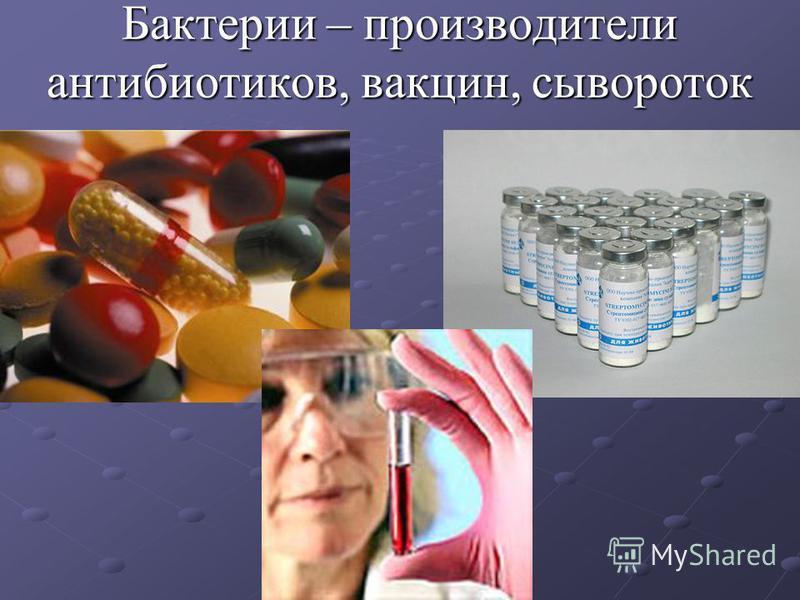 Бактерии – производители антибиотиков, вакцин, сывороток