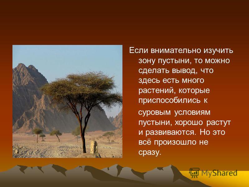 Если внимательно изучить зону пустыни, то можно сделать вывод, что здесь есть много растений, которые приспособились к суровым условиям пустыни, хорошо растут и развиваются. Но это всё произошло не сразу.