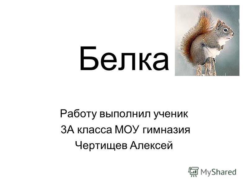 Белка Работу выполнил ученик 3А класса МОУ гимназия Чертищев Алексей