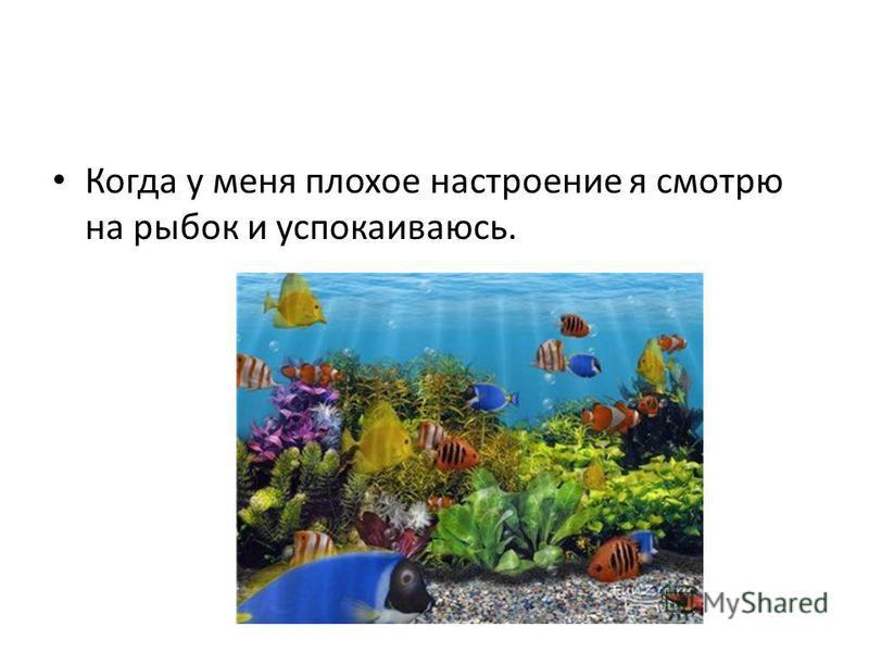 Когда у меня плохое настроение я смотрю на рыбок и успокаиваюсь.