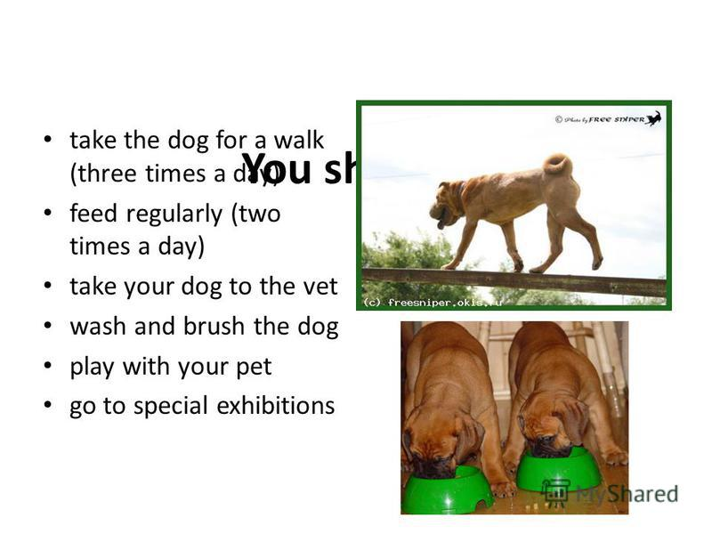 You should take the dog for a walk (three times a day) feed regularly (two times a day) take your dog to the vet wash and brush the dog play with your pet go to special exhibitions