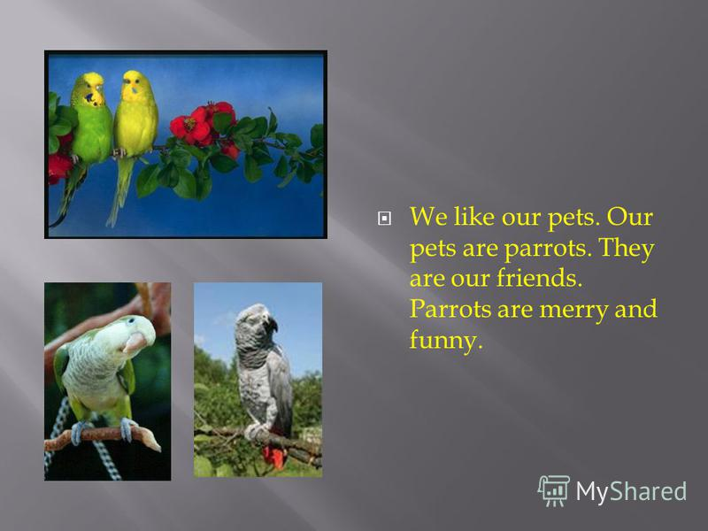 We like our pets. Our pets are parrots. They are our friends. Parrots are merry and funny.