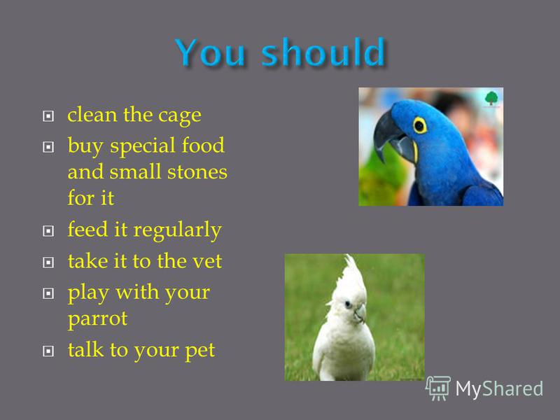 clean the cage buy special food and small stones for it feed it regularly take it to the vet play with your parrot talk to your pet