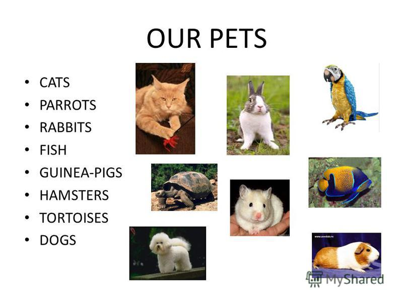 OUR PETS CATS PARROTS RABBITS FISH GUINEA-PIGS HAMSTERS TORTOISES DOGS