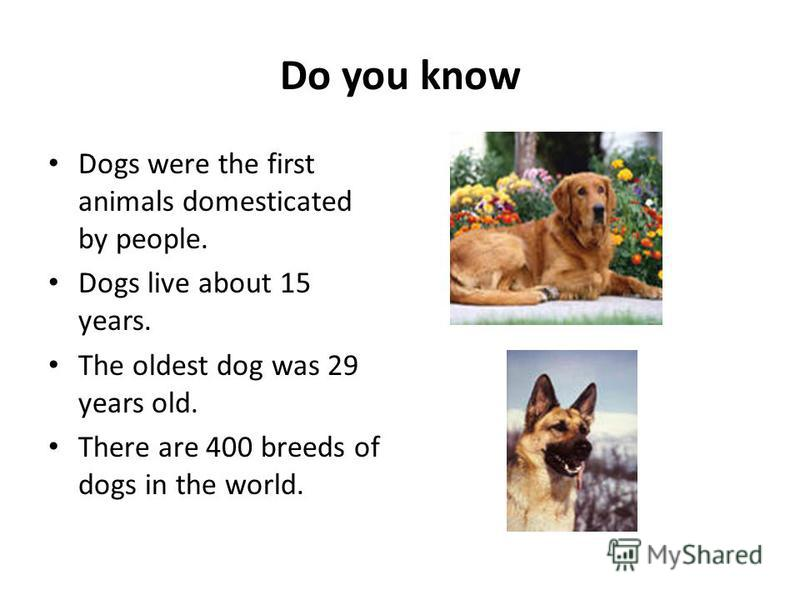 Do you know Dogs were the first animals domesticated by people. Dogs live about 15 years. The oldest dog was 29 years old. There are 400 breeds of dogs in the world.