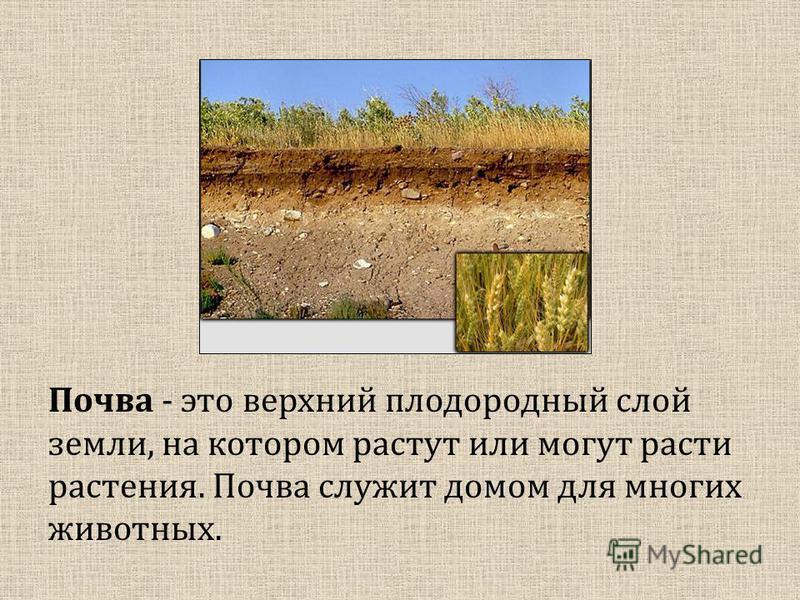 Почва - это верхний плодородный слой земли, на котором растут или могут расти растения. Почва служит домом для многих животных.
