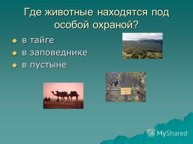 Где животные находятся под особой охраной? в в тайге заповеднике пустыне