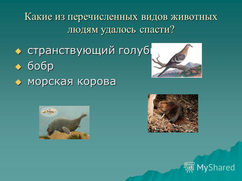 Какие из перечисленных видов животных людям удалось спасти? с странствующий голубь б бобр м морская корова