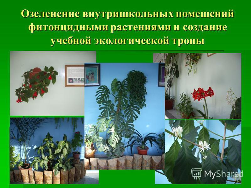 Озеленение внутришкольных помещений фитонцидными растениями и создание учебной экологической тропы