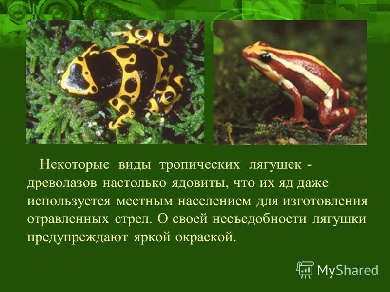 Некоторые виды тропических лягушек - древолазов настолько ядовиты, что их яд даже используется местным населением для изготовления отравленных стрел. О своей несъедобности лягушки предупреждают яркой окраской.