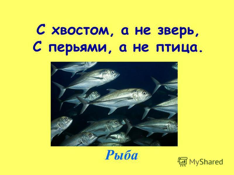 С хвостом, а не зверь, С перьями, а не птица. Рыба