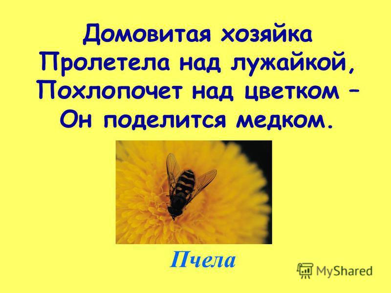 Домовитая хозяйка Пролетела над лужайкой, Похлопочет над цветком – Он поделится медком. Пчела