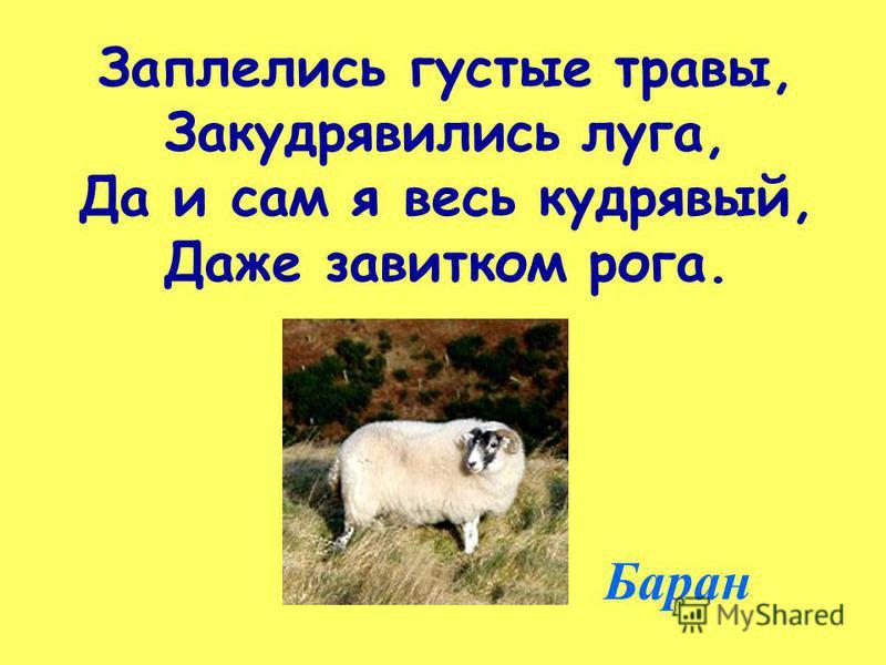 Заплелись густые травы, Закудрявились луга, Да и сам я весь кудрявый, Даже завитком рога. Баран