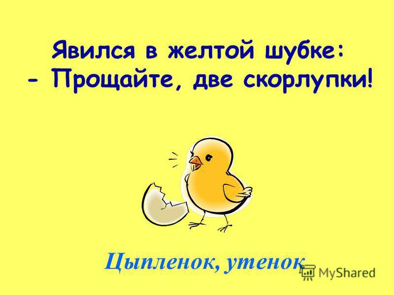 Явился в желтой шубке: - Прощайте, две скорлупки! Цыпленок, утенок