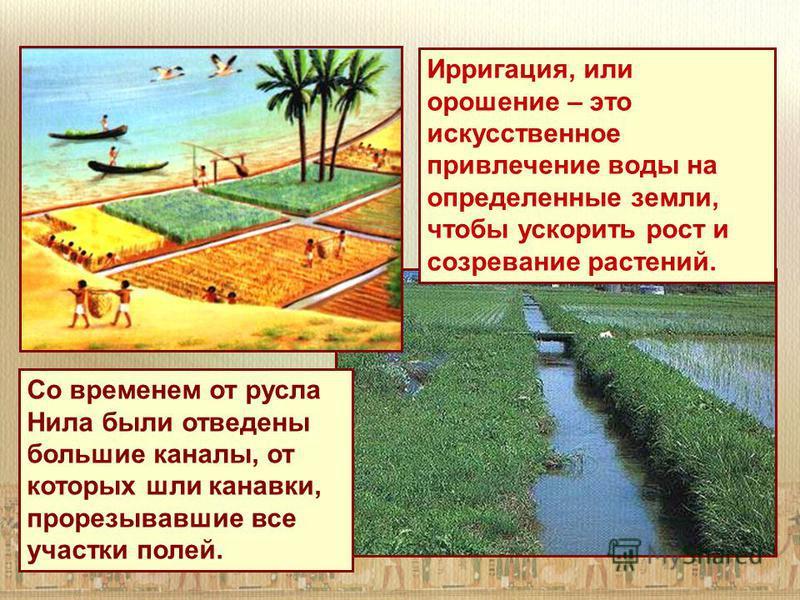 Ирригация, или орошение – это искусственное привлечение воды на определенные земли, чтобы ускорить рост и созревание растений. Со временем от русла Нила были отведены большие каналы, от которых шли канавки, прорезывавшие все участки полей.