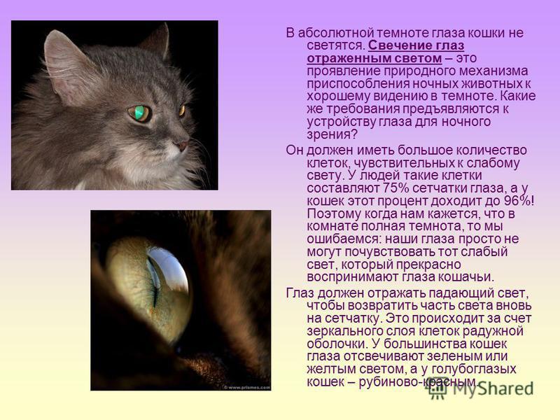 В абсолютной темноте глаза кошки не светятся. Свечение глаз отраженным светом – это проявление природного механизма приспособления ночных животных к хорошему видению в темноте. Какие же требования предъявляются к устройству глаза для ночного зрения?