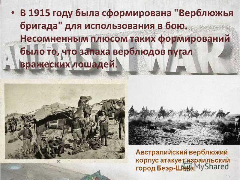 В 1915 году была сформирована Верблюжья бригада для использования в бою. Несомненным плюсом таких формирований было то, что запаха верблюдов пугал вражеских лошадей. Австралийский верблюжий корпус атакует израильский город Беэр-Шева.