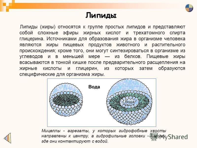 Липиды Липиды (жиры) относятся к группе простых липидов и представляют собой сложные эфиры жирных кислот и трехатомного спирта глицерина. Источниками для образования жира в организме человека являются жиры пищевых продуктов животного и растительного