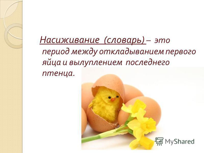Насиживание ( словарь ) – это период между откладыванием первого яйца и вылуплением последнего птенца.