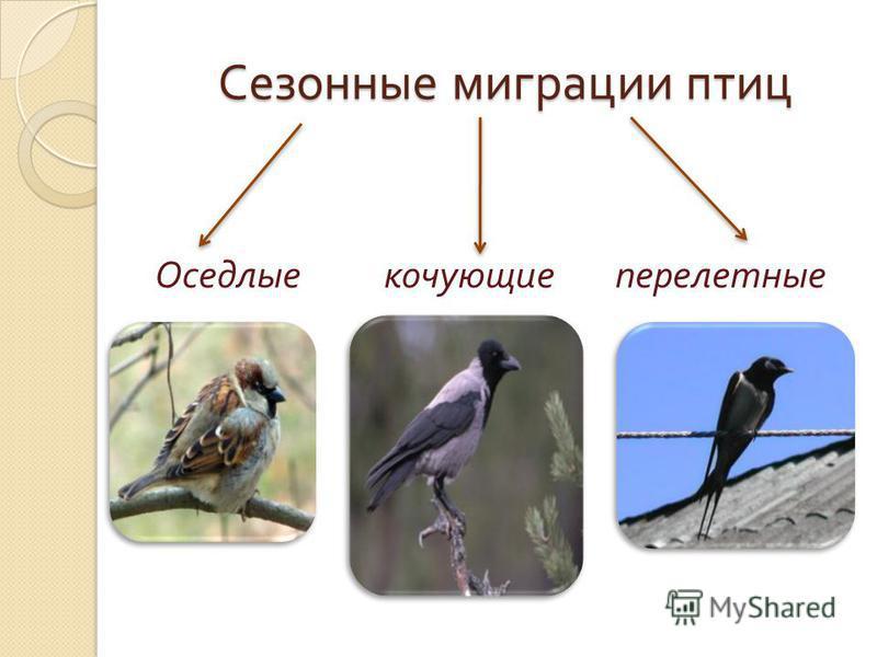Сезонные миграции птиц Сезонные миграции птиц Оседлые кочующие перелетные