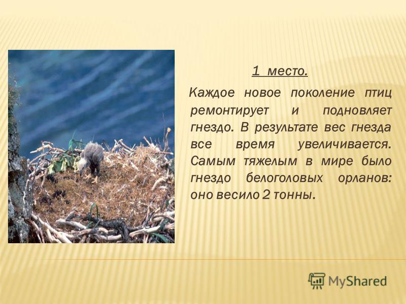 1 место. Каждое новое поколение птиц ремонтирует и подновляет гнездо. В результате вес гнезда все время увеличивается. Самым тяжелым в мире было гнездо белоголовых орланов: оно весило 2 тонны.