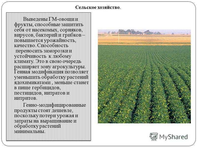 Выведены ГМ-овощи и фрукты, способные защитить себя от насекомых, сорняков, вирусов, бактерий и грибков – повышается урожайность, качество. Способность переносить заморозки и устойчивость к любому климату. Это в свою очередь расширяет зону агрокульту