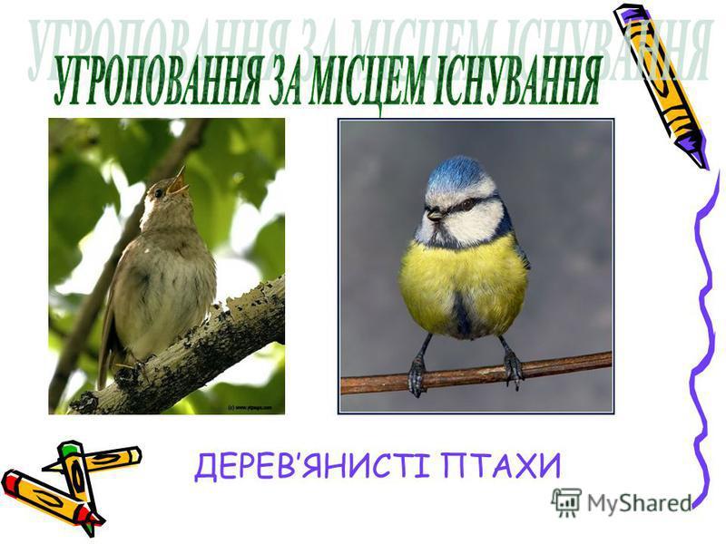 Деревянисті птахи ДЕРЕВЯНИСТІ ПТАХИ