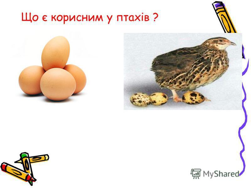 Що є корисним у птахів ?