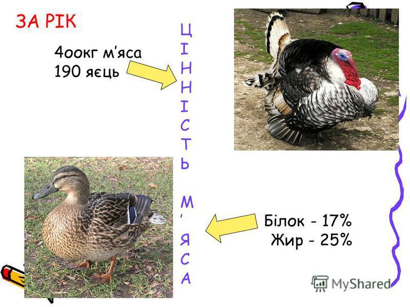 Ц І Н І С Т Ь М Білок - 17% Я Жир - 25% С А ЗА РІК 4оокг мяса 190 яєць