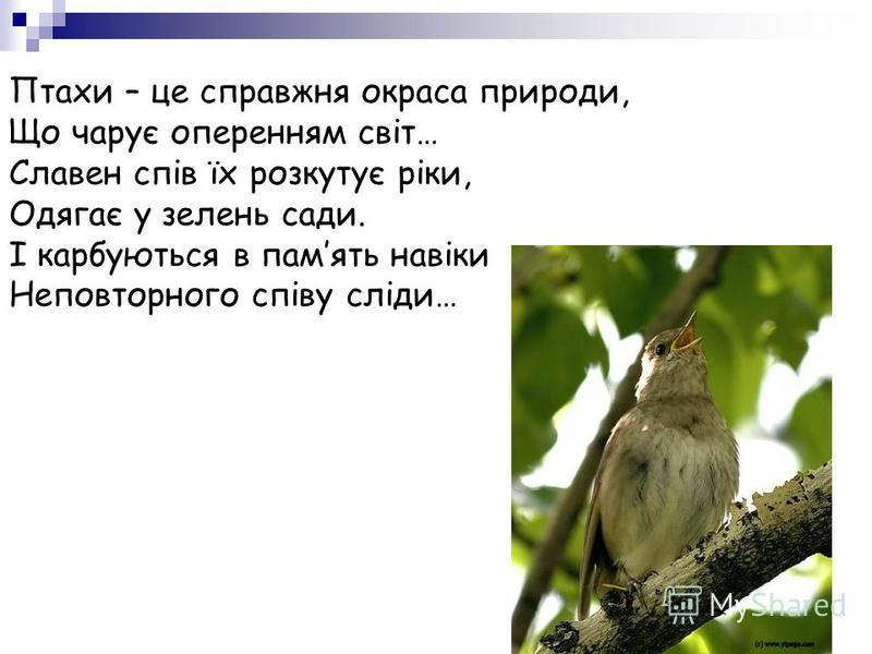 Птахи – це справжня окраса природи, Що чарує оперенням світ… Славен спів їх розкутує ріки, Одягає у зелень сади. І карбуються в память навіки Неповторного співу сліди…