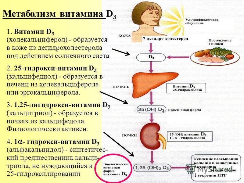 Метаболизм витамина D 3 1. Витамин D 3 (холекальцийферол) - образуется в коже из дегидрохолестерола под действием солнечного света 2. 25-гидрокси-витамин D 3 (кальцийфедиол) - образуется в печени из холекальцийферола или эргокальцийферола. 3. 1,25-ди