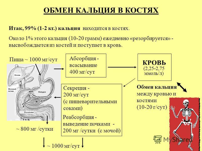 ОБМЕН КАЛЬЦИЯ В КОСТЯХ Итак, 99% (1-2 кг.) кальцийя находится в костях. Около 1% этого кальцийя (10-20 грамм) ежедневно «ресорбируется» - высвобождается из костей и поступает в кровь. Пища ~ 1000 мг/сут ~ 800 мг /сутки Абсорбция - всасывание 400 мг/с