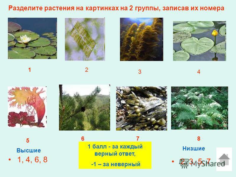Разделите растения на картинках на 2 группы, записав их номера 1, 4, 6, 8 2, 3, 5, 7 Высшие Низшие 12 3 5 4 678 1 балл - за каждый верный ответ, -1 – за неверный