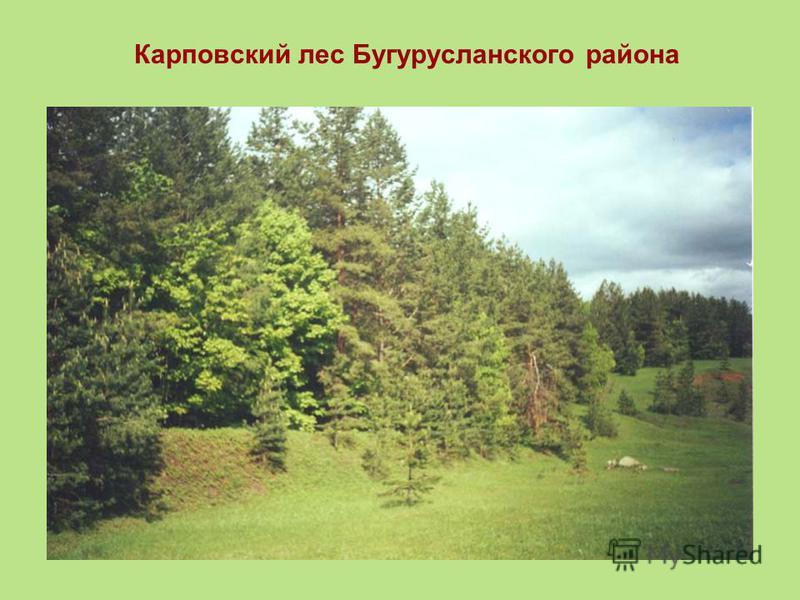 Карповский лес Бугурусланского района