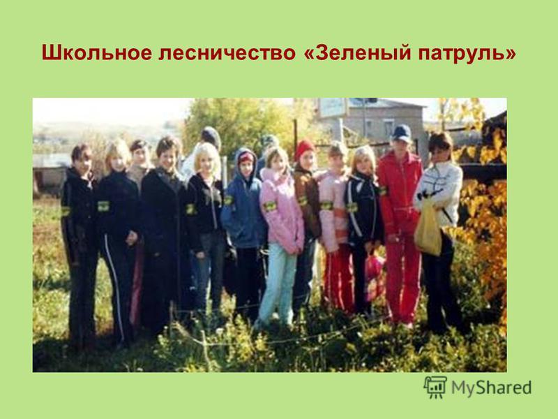 Школьное лесничество «Зеленый патруль»